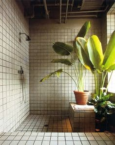 Kwiaty Doniczkowe W łazience I łazienka W 10 Dni